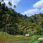 Sejur Combinat Bali Plaja Si Ubud